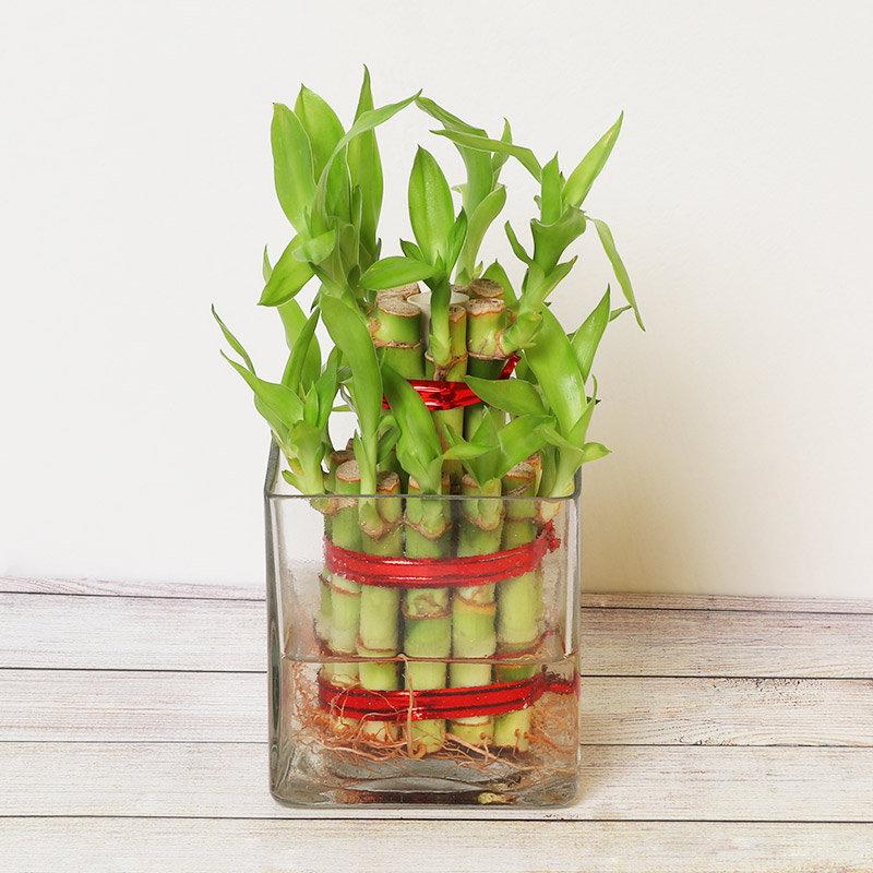 online indoor plant