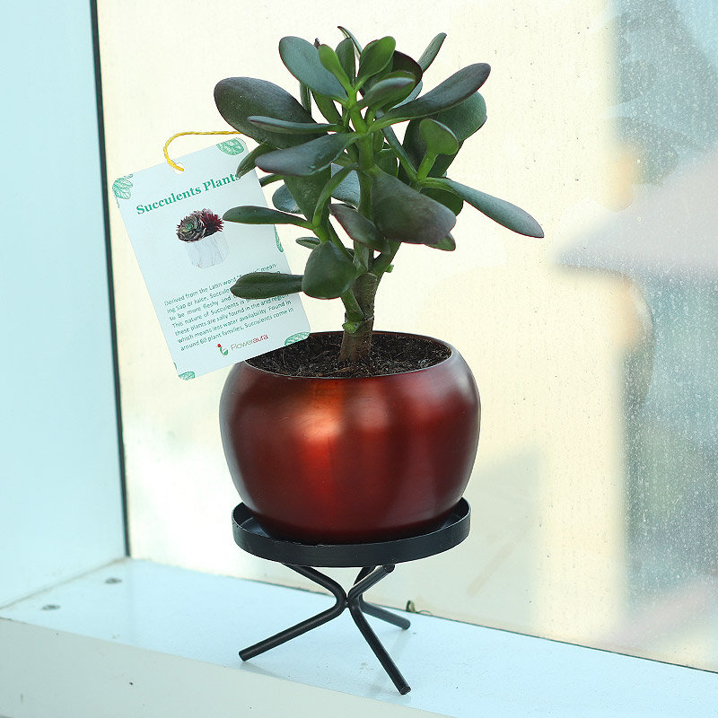 Ovata Orchid Vase - Air Purifying Plant Indoors in Orchid Vase