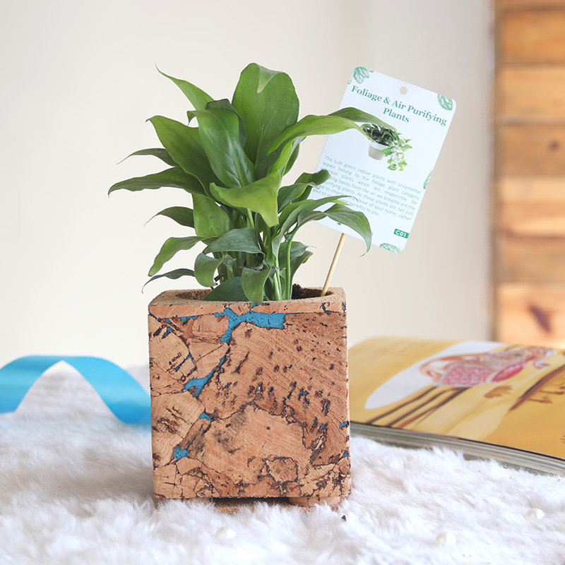 Peace Lily Cork Vase Plant: Air Purifying