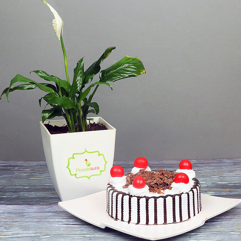 Peace Lily Plant with Blackforest Cake Combo for Mom