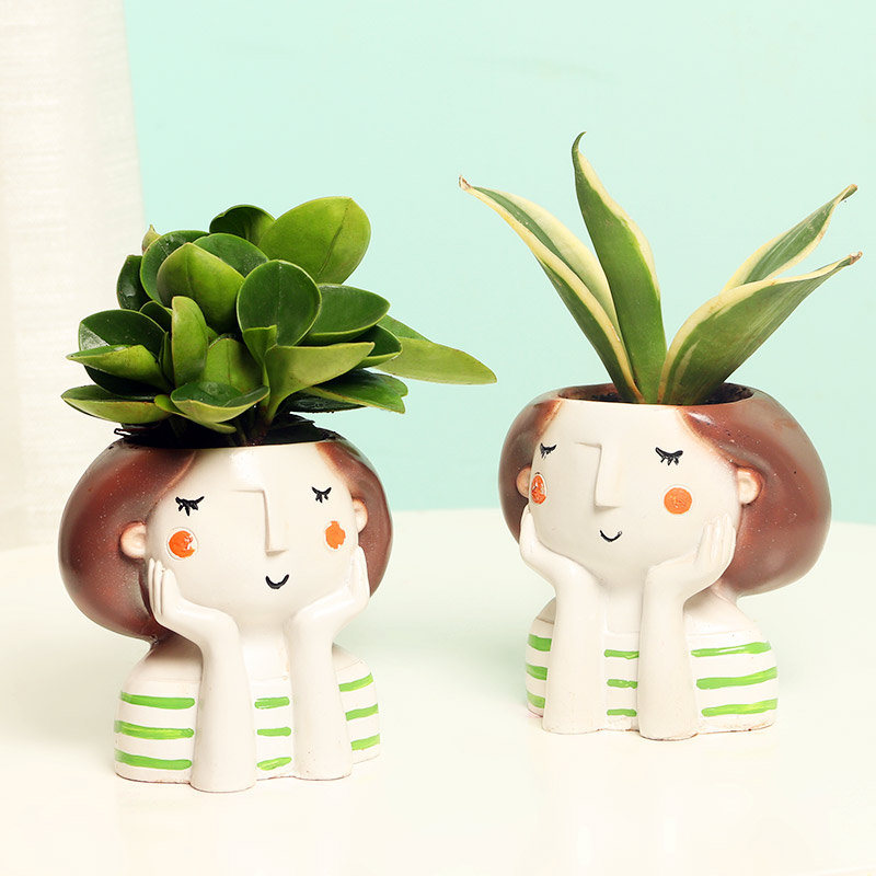 Peperomia and Sansevieria Plant in a Vase