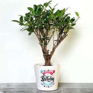 Personalised Ficus Bonsai Plant for Birthday