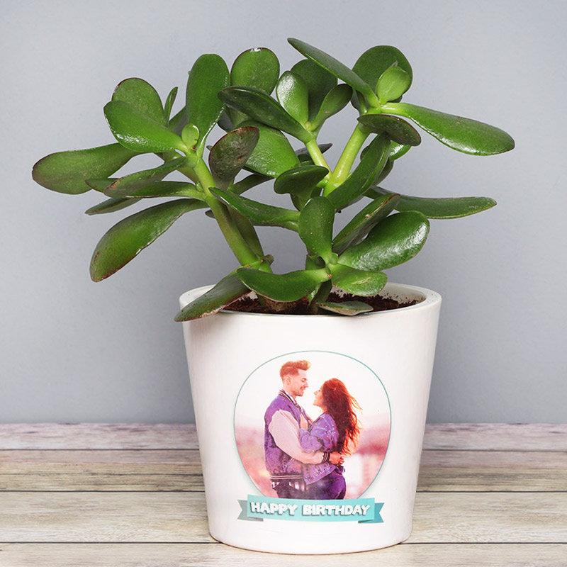 Personalised Crassula Ovata Plant for Birthday