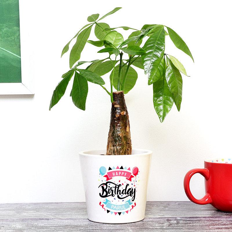 Personalised Pachira Plant for Birthday