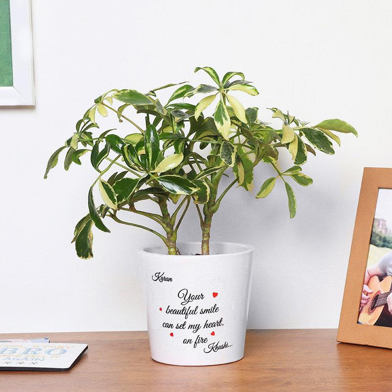 Personalised Love Themed Schefflera Plant