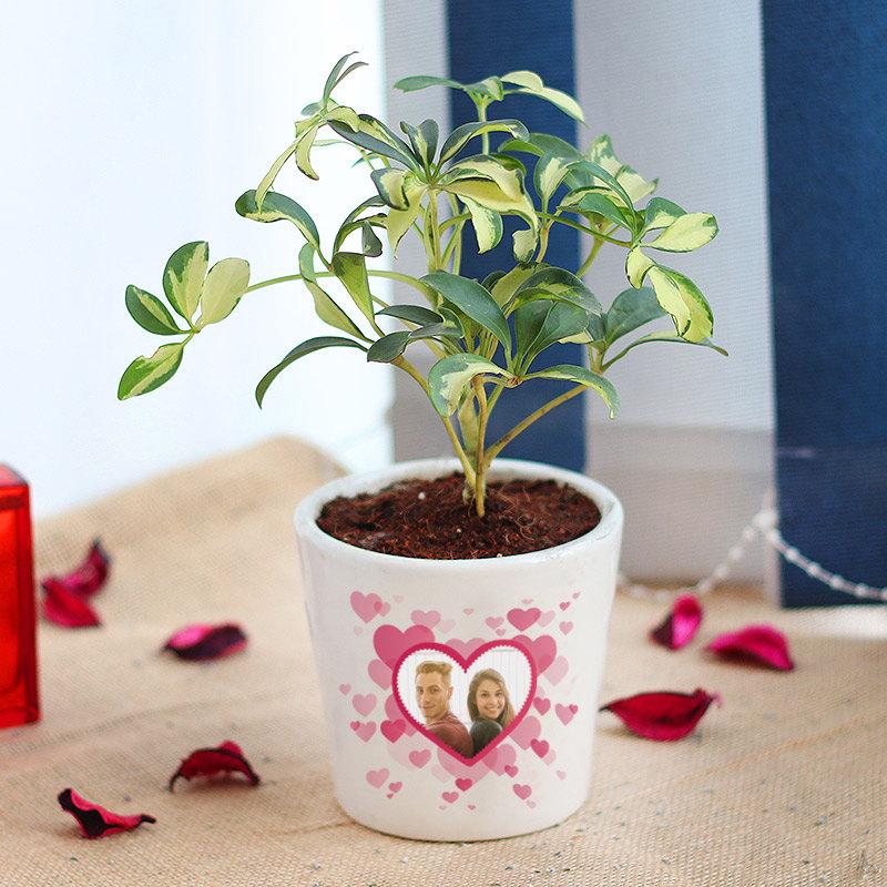 Personalized Schefflera Plant