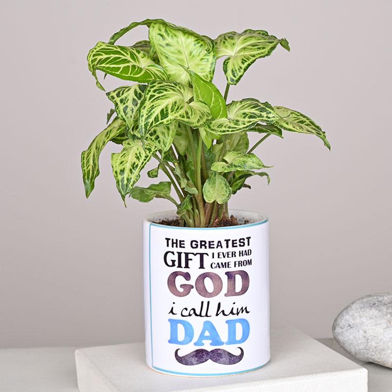 Syngonium Plant in Ceramic Vase
