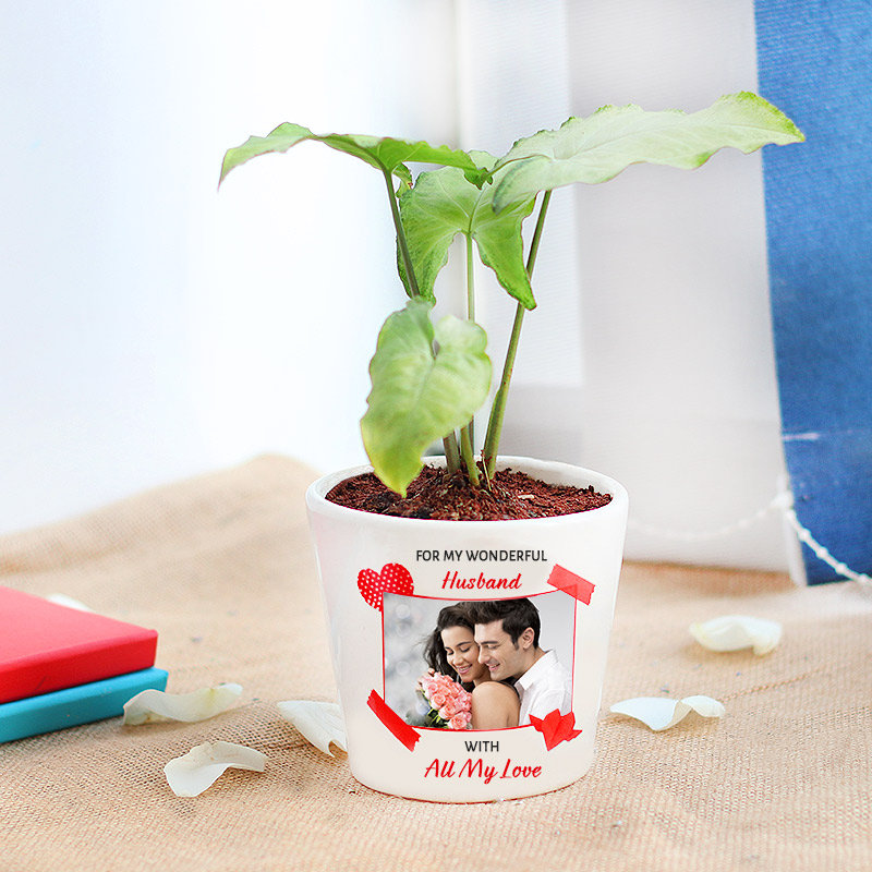 Personalized Syngonium Plant