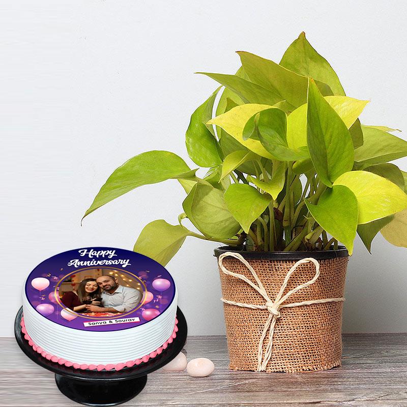 Photo Cake N Money Plant Combo