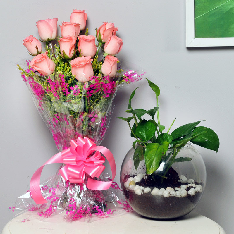 Pinky Money Luck Combo - Good Luck Plant Indoors in Gola Vase with Bunch of 10 Pink Roses