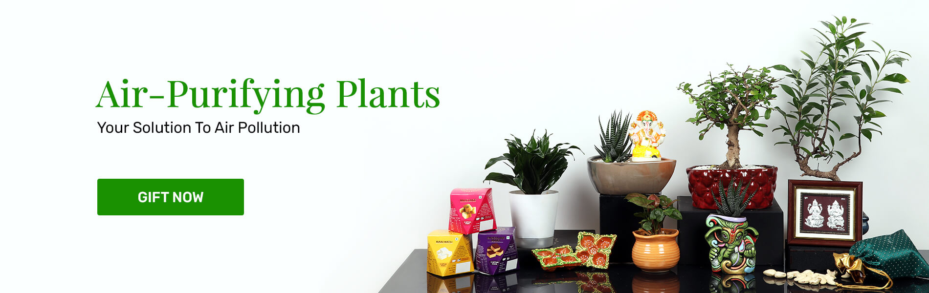 Send Plants Online in India