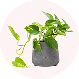 Order Plants Online to India