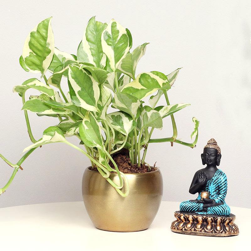 Pothos Blessing Buddha Combo
