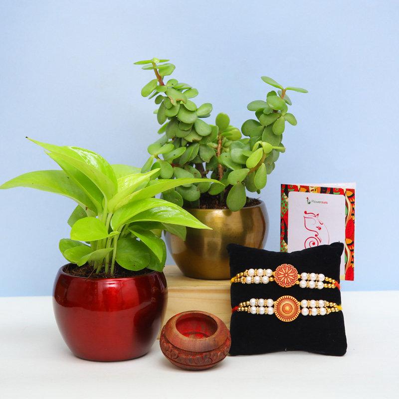 Potted Plants N Rakhis