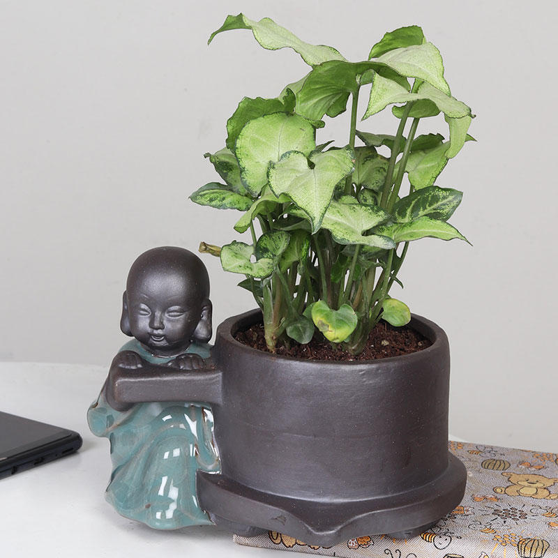 Potted Syngonium Plant