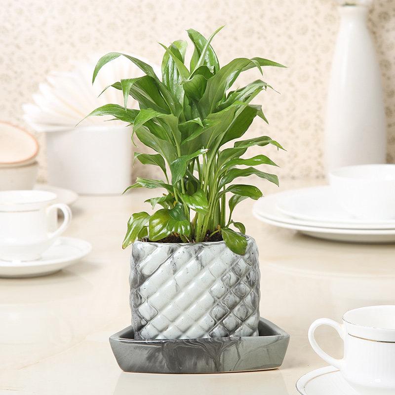 Pretty Peace Lily Plant