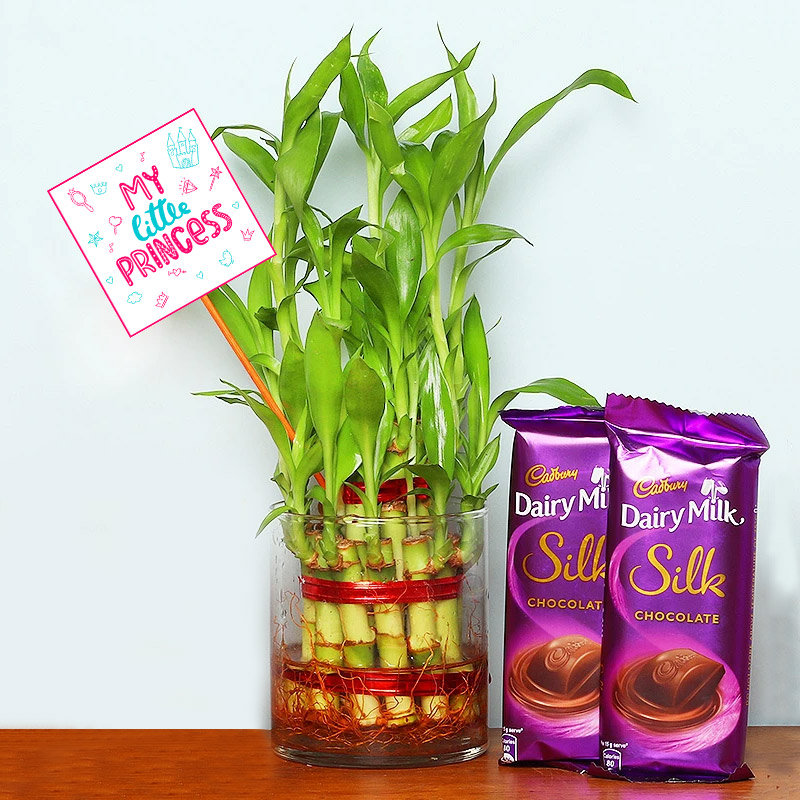 Lucky Bamboo with Chocolates for Daughter
