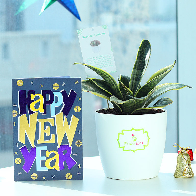 Purifying New Year Wishes - Air Purifying Plant Indoors in Rhonda Vase with New Year Greeting Card