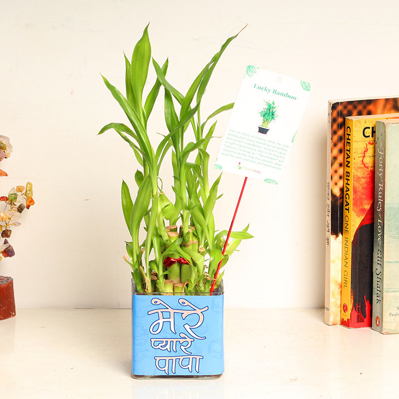Bamboo Plant Gift for Dad