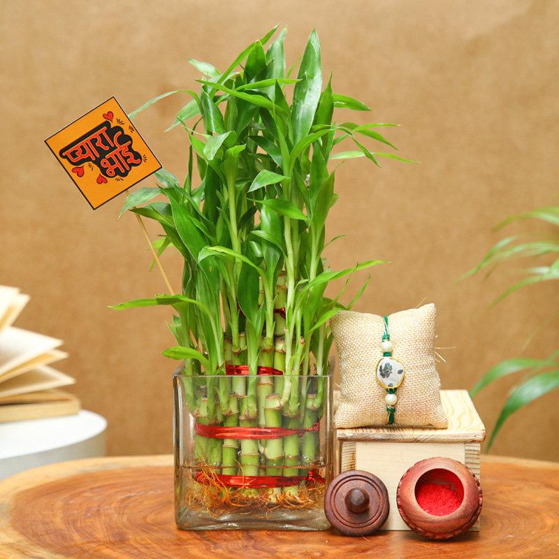 Pyara Bhai Layer Bamboo Plant