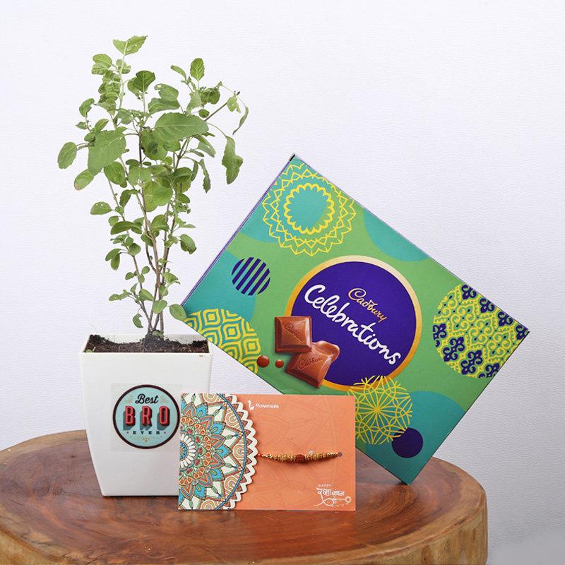 Rakhi Celebrations Plant Combo