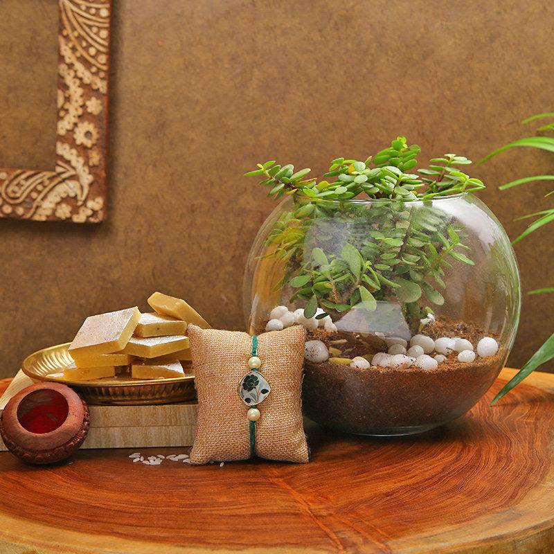 Rakhi Plant And Sweets Combo
