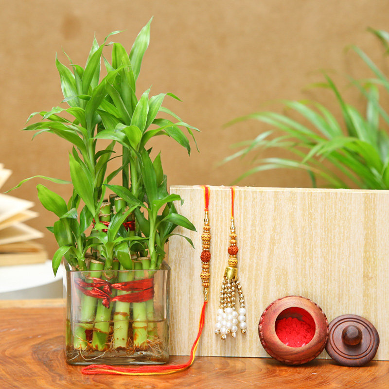 Lumba Rakhi Set With Two Layer Bamboo Plant
