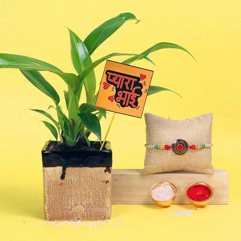 Rakhi With Green Philodendron Plant - One Pearl Rakhi with Foliage Plant in Picaso Light Brown Vase