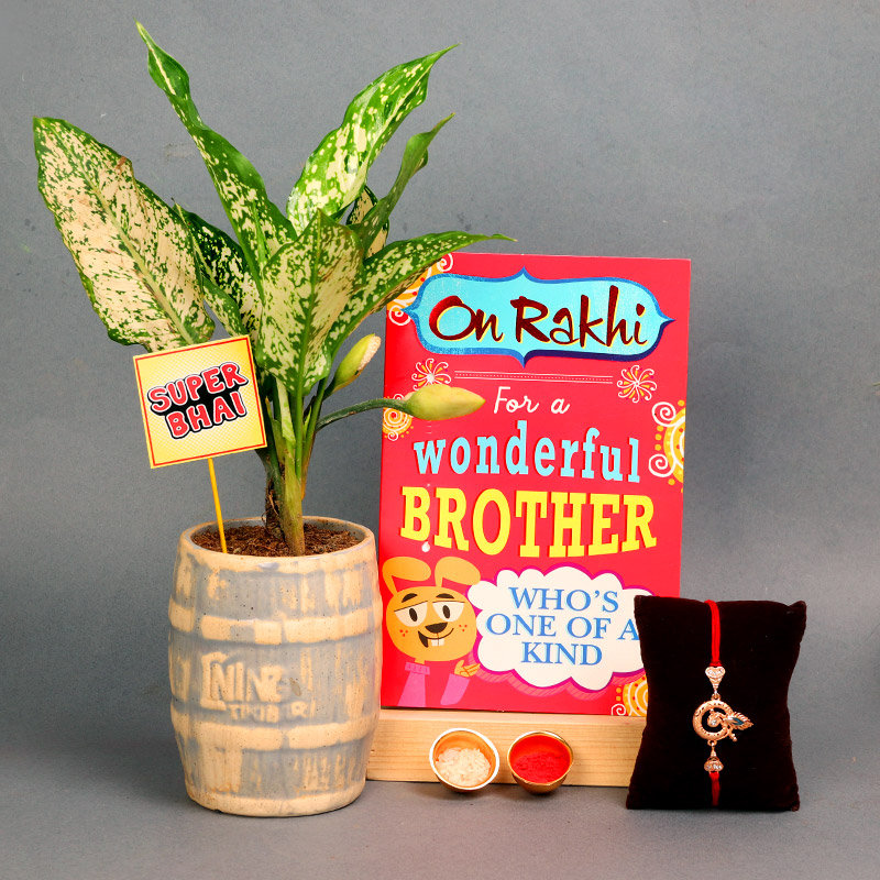 Rakhi With Silver Aglaonema - One Divine Rakhi with Roli and Chawal and One Greeting Card and Super Bhai Stick and Air Purifying Plant
