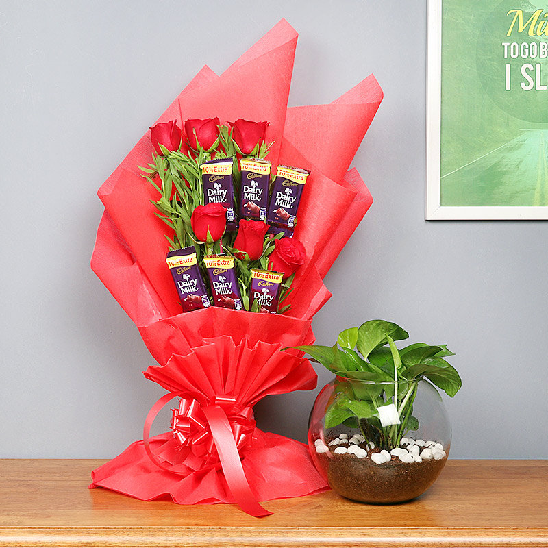 Red Money Plant Combo - Good Luck Plant Indoors in Gola Vase with Bouquet of 6 Dairy Milk Chocolates and 5 Red Roses