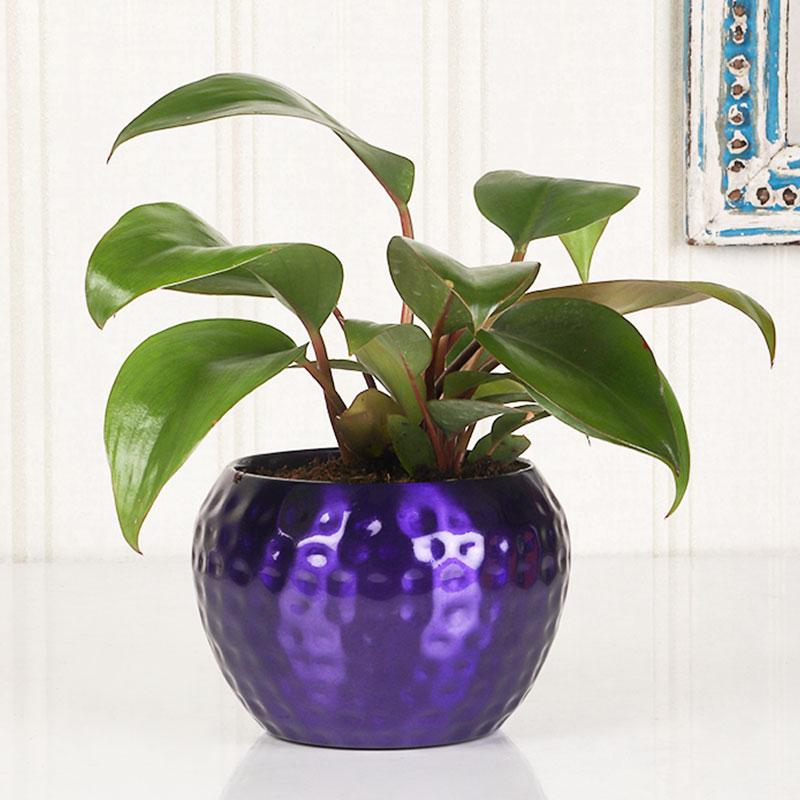 Red Philodendron Blue Vase