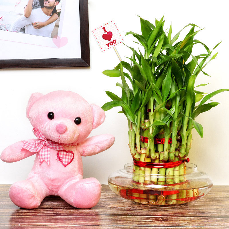 Teddy Soft Toy and 3 Layer Bamboo Plant Combo Gift