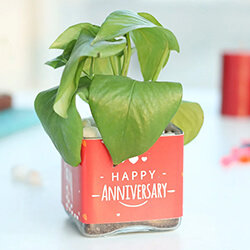 Plants for Anniversary