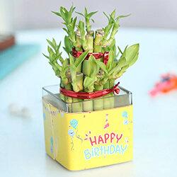 Buy Birthday Plant Online