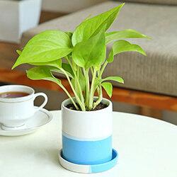 Sameday Plants