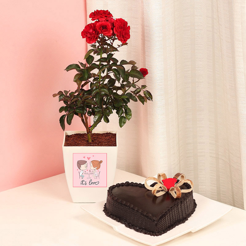 Rosy Heart Red Rose Plant and Cake Combo