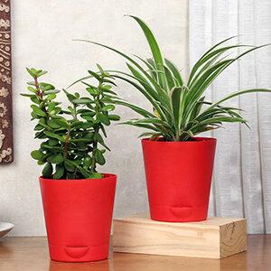Same Day Plants