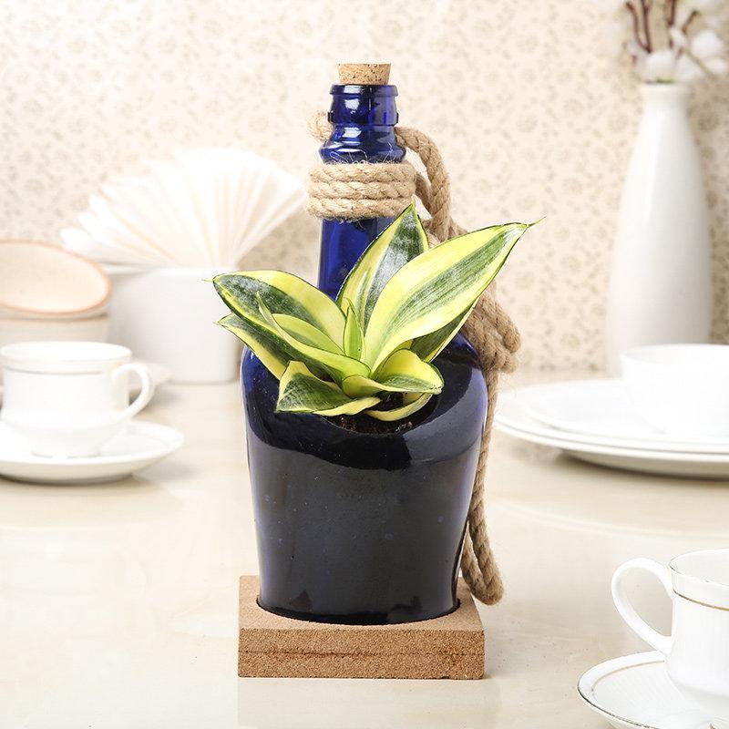 Sansevieria Lotus In A Bottle
