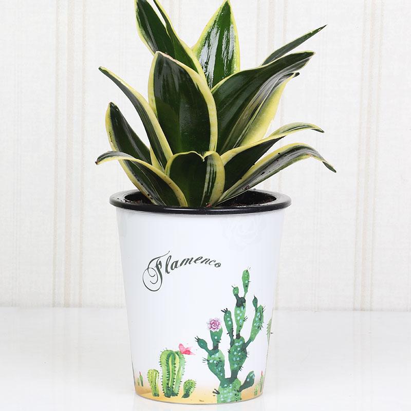 Sensveria Milt Cactus Vase