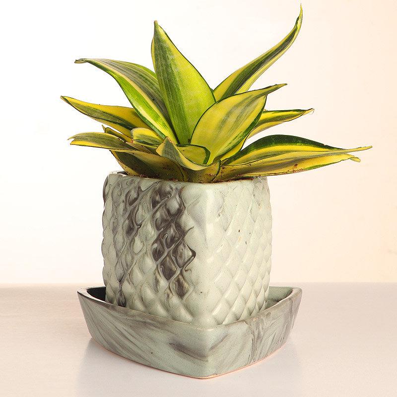 Sensveria Milt Plant with Triangular Vase