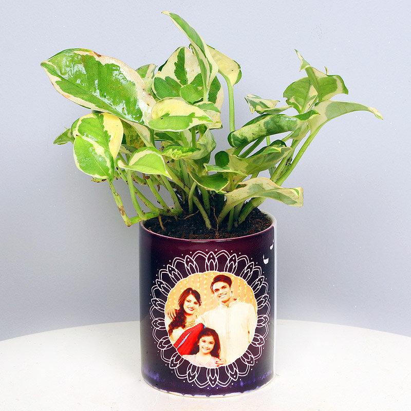 Serene Pothos Plant - Foliage Plant Indoors in Mug Personalized Vase