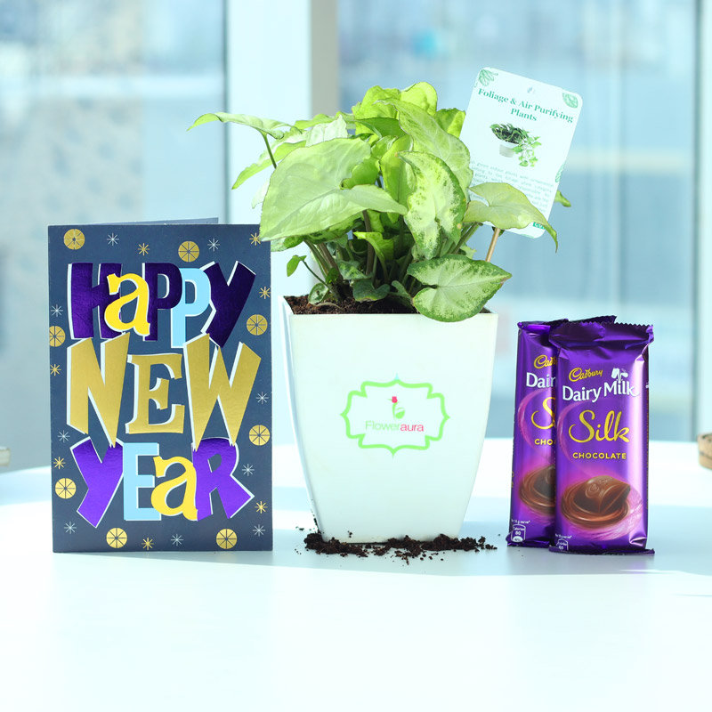 Silky Green Wishes - Foliage Plant Indoors in Chatura Vase with New Year Greeting Card and 2 Dairy Milk Silk