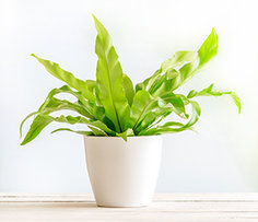 Plant Gift Online in India