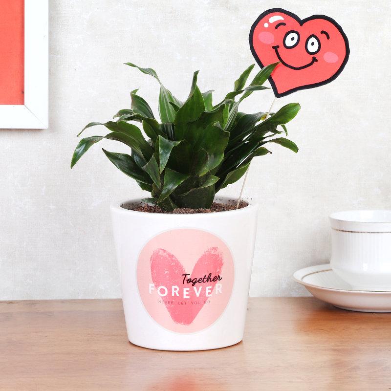 Smiley Heart Dracena Vday Combo