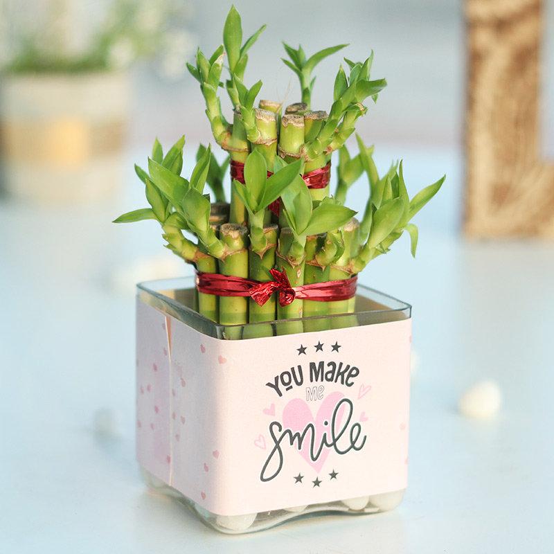 Smiling Bamboo Plant in Square Glass Vase