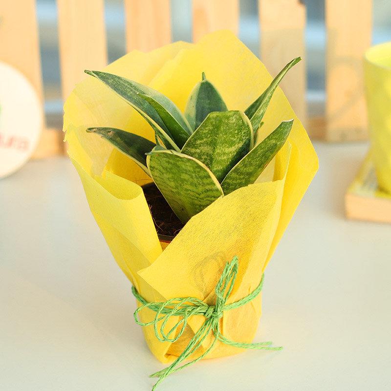 Snake Around Plant - Air Purifying Plant Indoors in Plastic Standard Vase