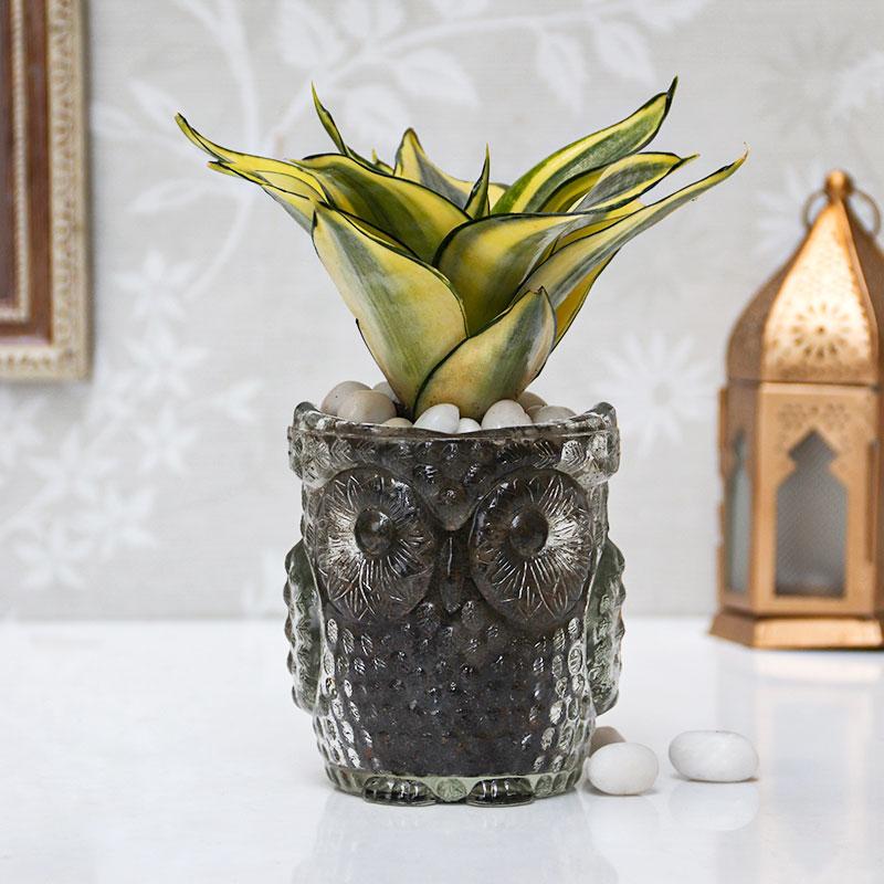 Snake Plant Owl Vase