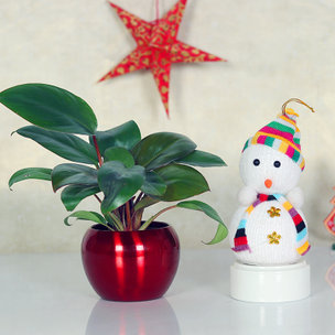 Xmas Combo Gift of Snowman  and Red Philodendron Plant