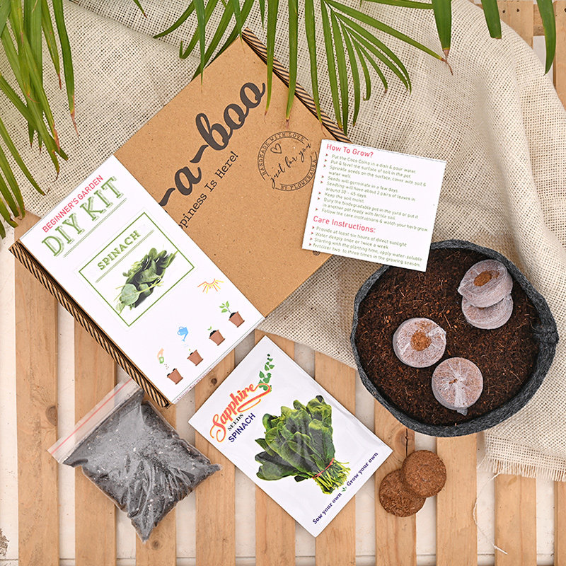 Spinach Seed Kit