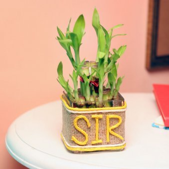 2 Layer Bamboo Plant for Boss